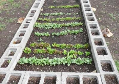 Making Raised Beds With Concrete Blocks