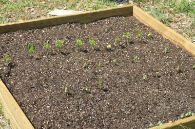 RE: Starting a Vegetable Garden