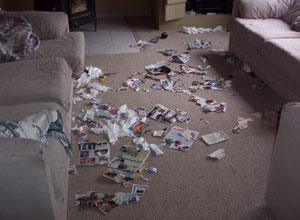 Dog tearing up papers