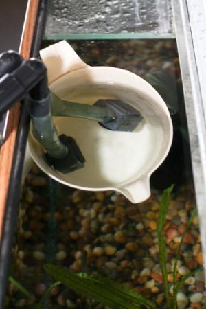 Putting filter tubes in aquarium
