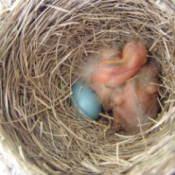 Photo of Baby Birds