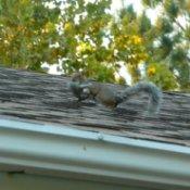 photo of Mama squirrel