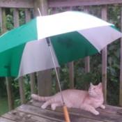 A cat under an umbrella outside