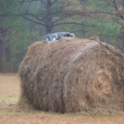 Photo of a dog on a haystack
