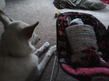 photo of dog laying on carpet