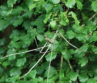 a humming bird resting on a branch