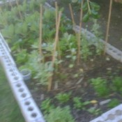 Raised vegetable garden