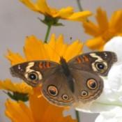 Garden Center Butterfly