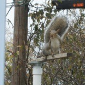 Squirrel on top of birdfeeder