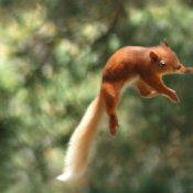 A red squirrel jumping to a tree.