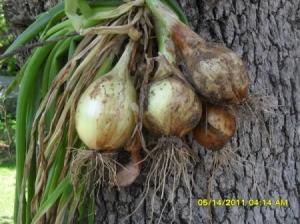 Photo of Fresh Veggies