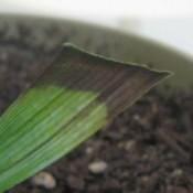 Closeup of straight cut plant leaf
