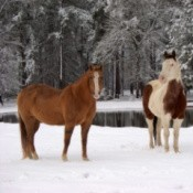 Two horses in the snow.