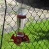 A hummingbird feeder.