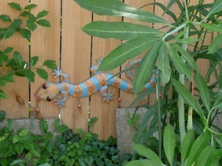 Photo of multi leaf plant against fence
