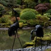 Portland Japanese Garden Cranes