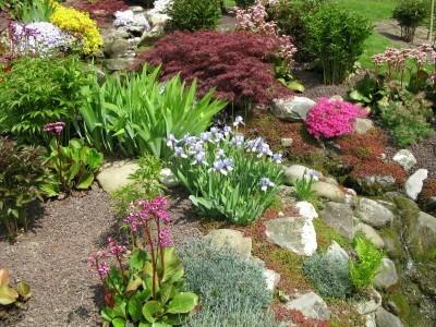 Flowering rock garden