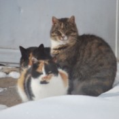 Three cats sitting in the snow
