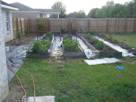 A planted garden in a fenced in back yard.