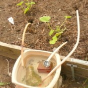 bowl of water with wicks going to garden plants