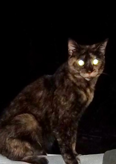A calico cat with glowing night eyes.