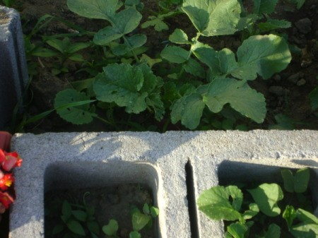 A close up of plants growing in a cinder block.