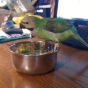 A bird on a table and perched on a metal bowl.