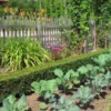 Managing Vegetable Garden