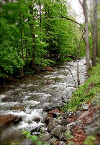 A small shallow river running through some woods.