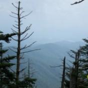 Smokey Mountains Pines