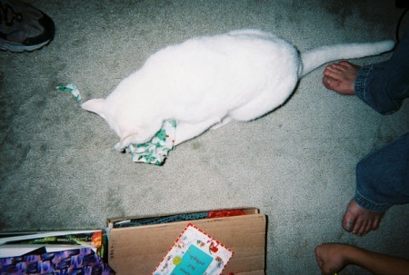A white cat playing with a toy on the carpet.