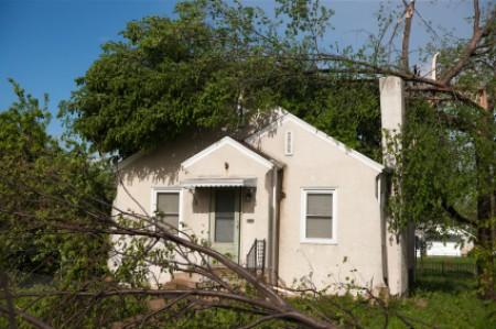 Fallen tree on house