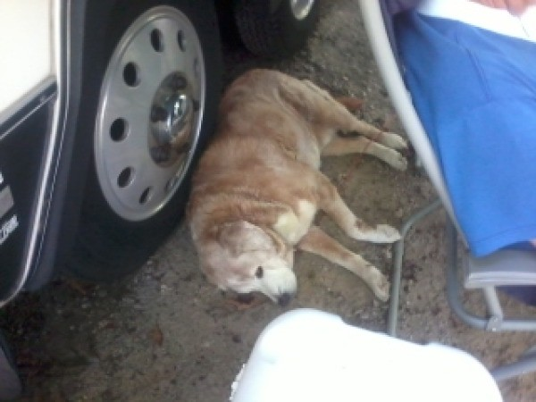 dog lying near tire