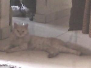 tan cat lying on tile floor