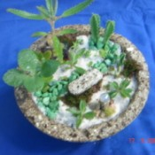 top  view of circular planter with succulents