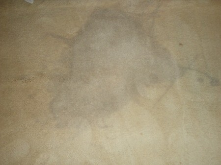 Grayish stain on tan carpet