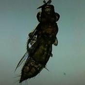 dark photo of three segment winged insect