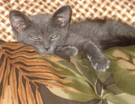 A grey kitten sleeping on top of a tropical pillow.