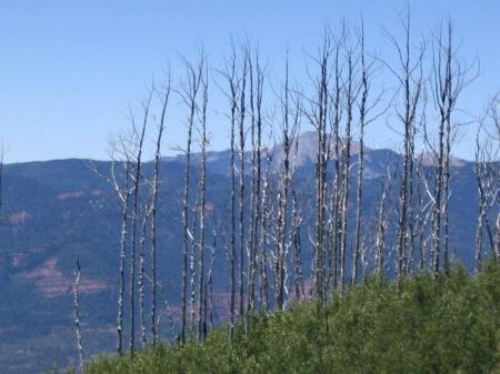 The burned treeline at Missionary Ridge, CO.