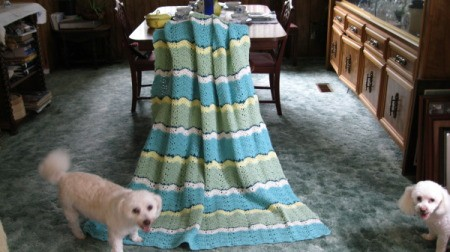 Dogs standing on afghan blanket