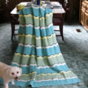 Dogs standing on afghan blanket