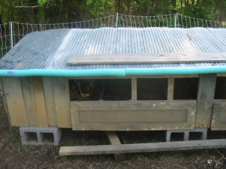 Chicken coop with pool noodles around edge of tin roof.