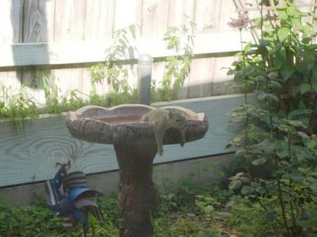 Squirrels on the birdfeeder