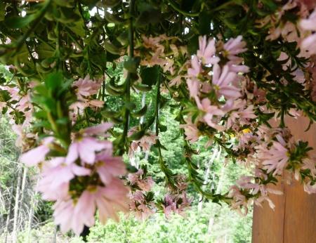 closeup of flowers