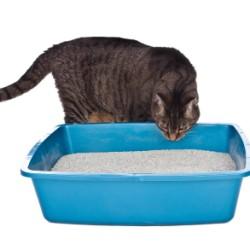A cat smelling a litter box