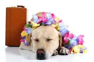 Traveling With Pets, Dog with Lei and suitcase