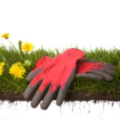 Garden gloves displayed on grass
