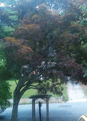 Photo of tree with red leaves