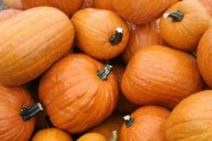 Photo of several pumpkins.