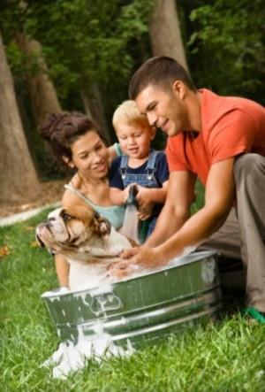 Bathing the Family Dog